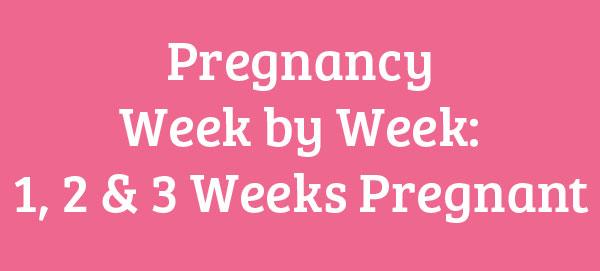 1, 2 & 3 Weeks Pregnant