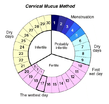 Natural Birth Control Cervical Mucus Method