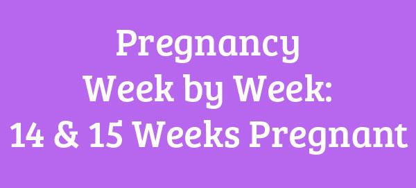 14 & 15 Weeks Pregnant