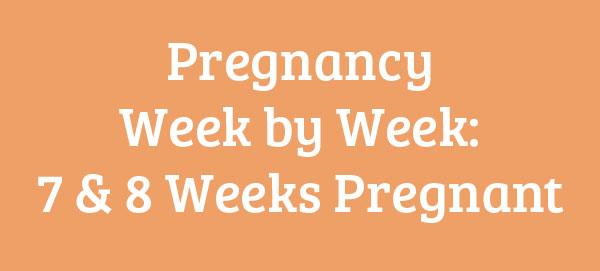 7 & 8 Weeks Pregnant